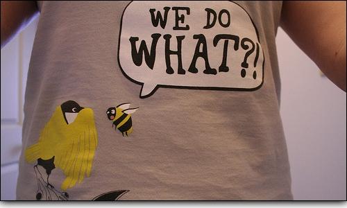 Birdsbees1